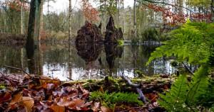 Fototur til Folehaveskoven @ Hørsholm | Danmark