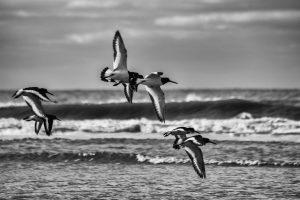 nr 23 Lisbeth Larsen -Fugle over havet