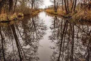 nr 24 Evelyn P Fiig -skovens lange grene