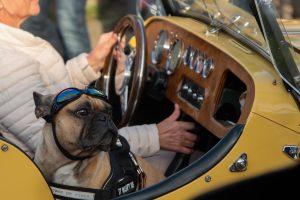nr 10 Dorthe Dalby Nielsen - Motorhund