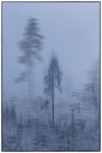 nr 18 Fine Holten - Vinterskov