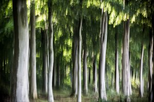 nr 23 Ove Lyngsie - Træer