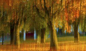 nr 3 Ove Lyngsie - Træer