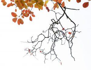 nr 16 - Karin McMillan-Efterårsblade