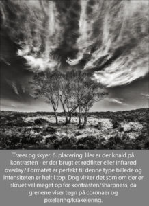 nr 6 Ove Lyngsie-Træer og skyer