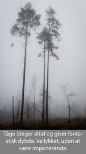 nr 22-Fine Holten-Tågeskoven