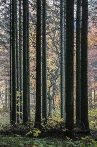 nr 13 Lisbeth Larsen-Hvad skoven gemmer