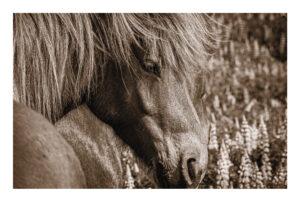 nr 3 Brian Jørgensen-Horse_framed_in_white